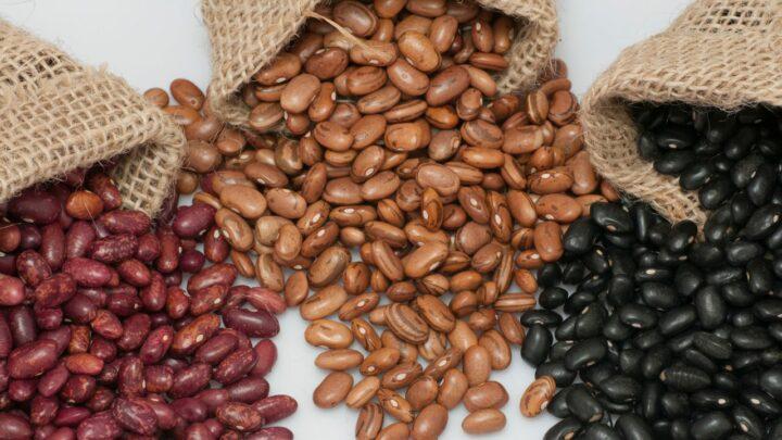 Produção de feijão deve crescer 6,3% em Goiás