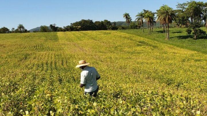 Projeto estimula a soja no Centro-Oeste de Minas
