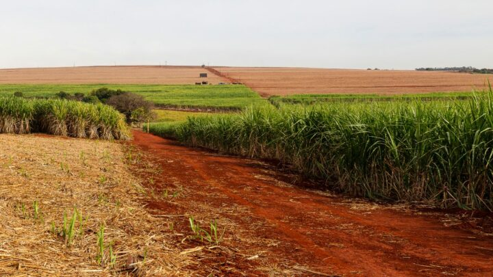 Qual a eficiência da cana-de-açúcar em converter a energia solar interceptada pelas folhas em biomassa