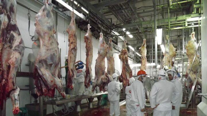 Receita com exportações de carne bovina cresce