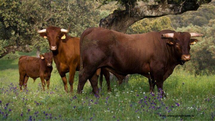 ANC defende manutenção da exportação de gado em pé