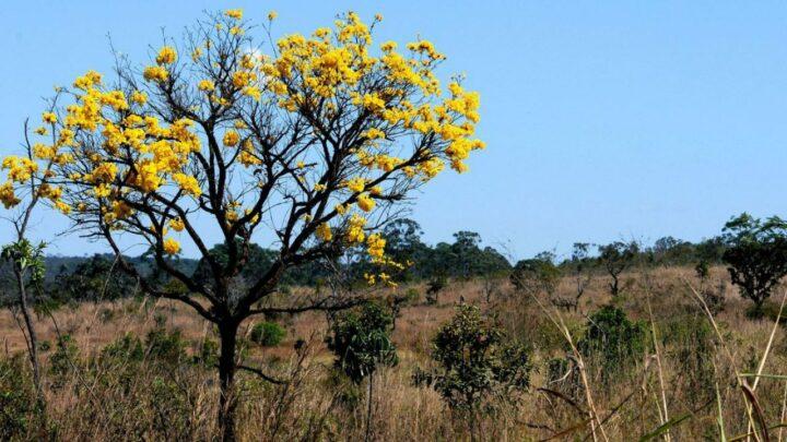 Agricultura cresce 460% no Cerrado