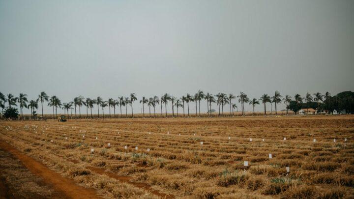 Confina Brasil e os cultivares de forragem