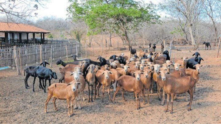 Enxofre e a grande importância para nutrição animal