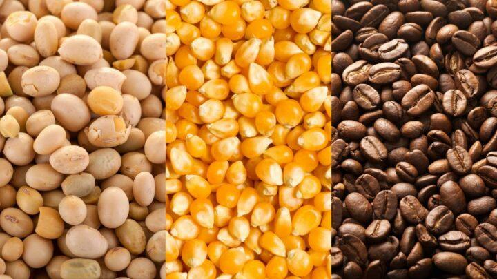 Expectativas geram baixas nas cotações de soja, milho e café