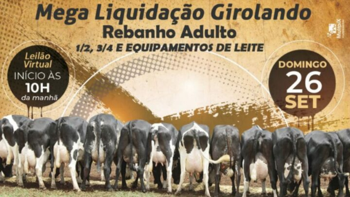 Fazenda Limeira promove Mega Liquidação Girolando Rebanho Adulto
