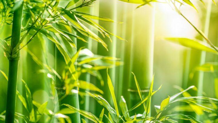 Fibra natural o próximo ouro verde