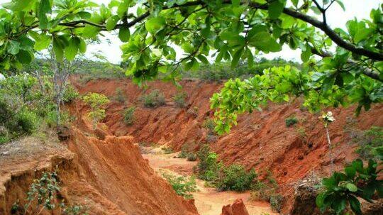 A erosão das terras afeta a qualidade das pastagens devido ao carreamento das partículas do solo (areia, silte e argila).