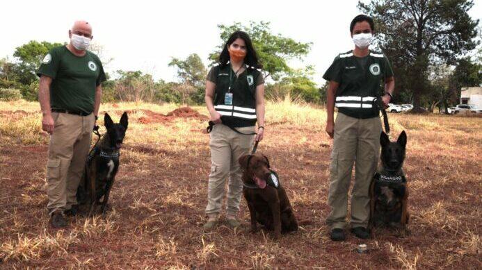 Cães farejadores na vigilância agropecuária