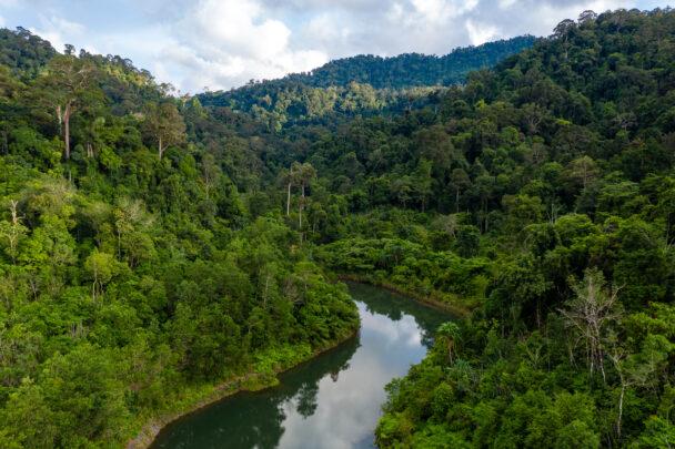 Estudo sobre áreas destinadas à preservação da vegetação nativa