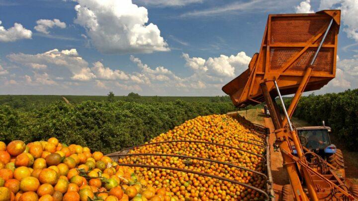 São Paulo reduz do ICMS do suco de laranja