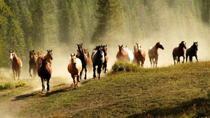 O que os cavalos nos ensinam sobre liberdade e a vida em sociedade