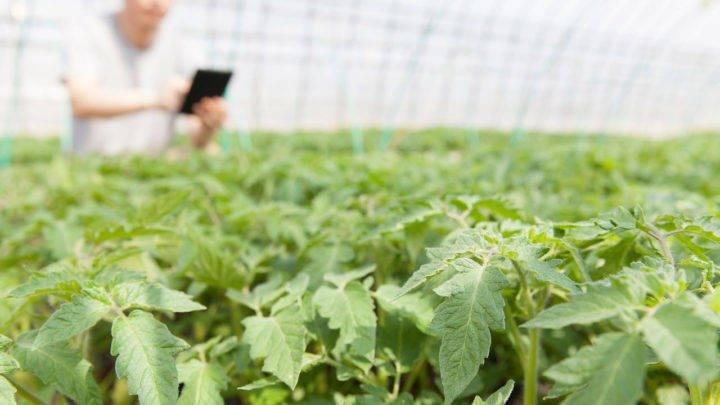 Liderança de Alto Impacto o Agro precisa avançar – parte 5